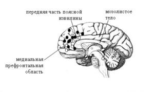 взаимодействие между корой задней части поясной извилины и медиальной префронтальной корой