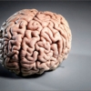 Головной мозг созревает не раньше, чем в 30 лет, утверждают специалисты