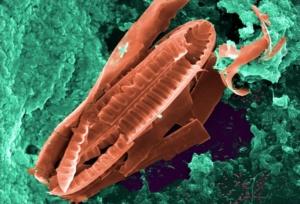 Кишечные бактерии могут контролировать наши гены