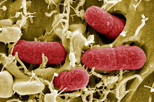 В кишечнике нашли манипулирующие мозгом человека бактерии