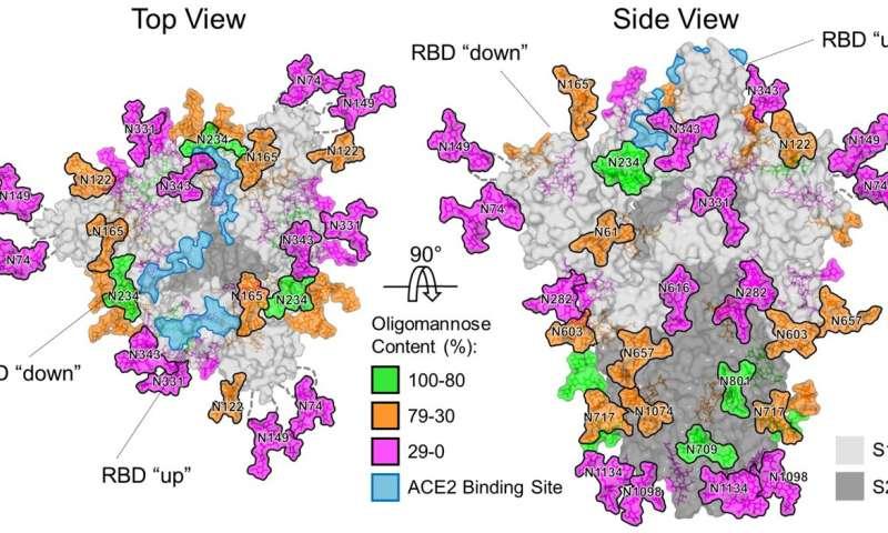 Ученые из Великобритании нашли у коронавируса «слабое место»